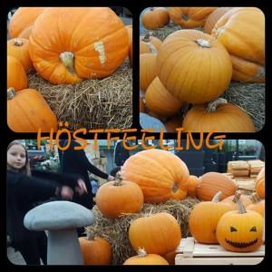 hostfeeeling